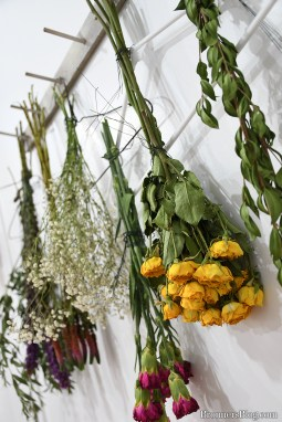Flowers hang upside down to dry.