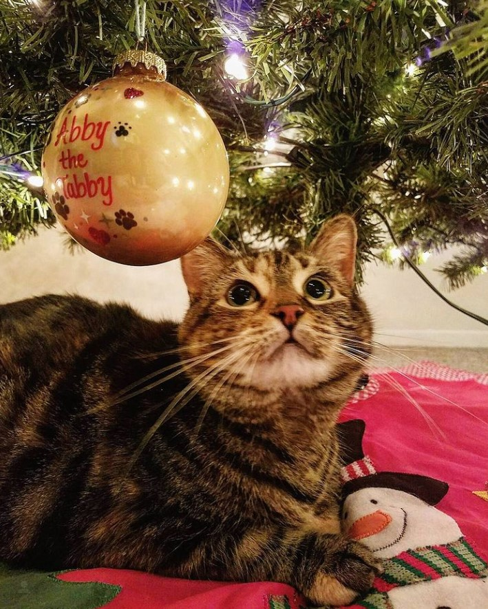 Tabby cat beneath Christmas tree with Bronner's personalized ornament