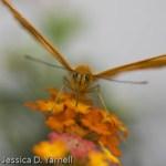 Lukas Butterfly Encounter