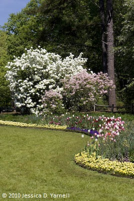 Dogwoods, azaleas, and tulips