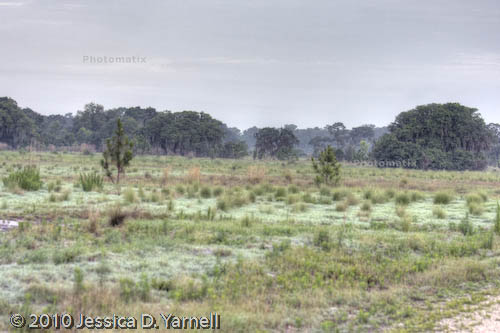 HDR Image of Eagle Roost at Dawn