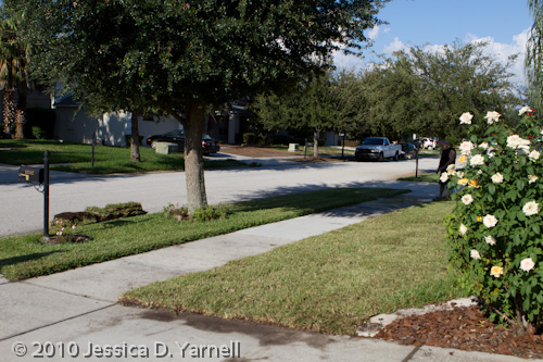Front yard with new sod