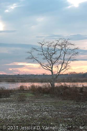 Sunset at Circle B (HDR)
