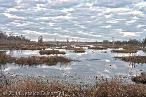 Cloudy Marsh (HDR)