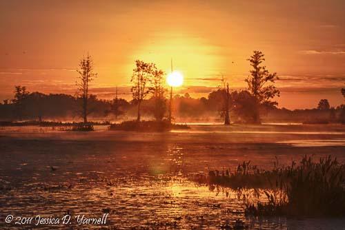 Magical Circle B Sunrise. Circle B Bar Reserve. November 2011.