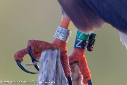 Band close-up