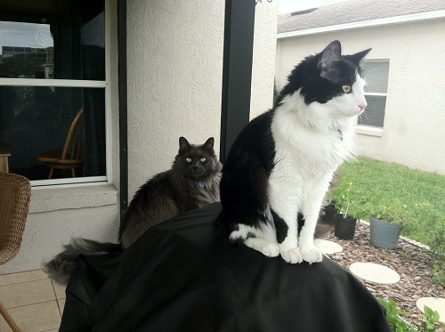Whiskey's favorite place is the porch, where he gets to stalk lizards and watch for birds. He and Squirt now share Squirt's favorite perch on the grill.
