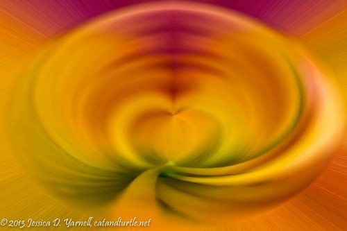 Heart of a Daylily