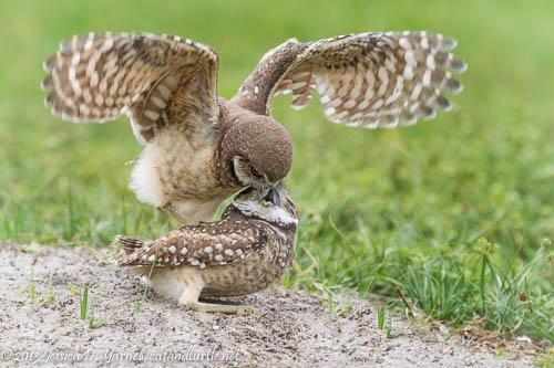 I Flew!  So Feed Me Already!