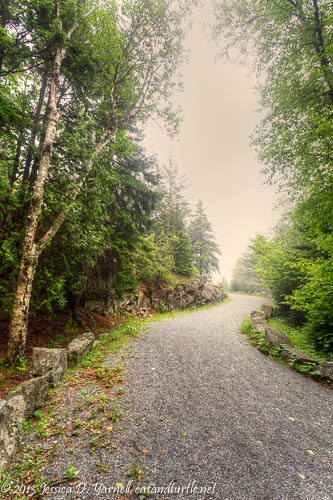 Carriage Roads in the Fog, Acadia National Park