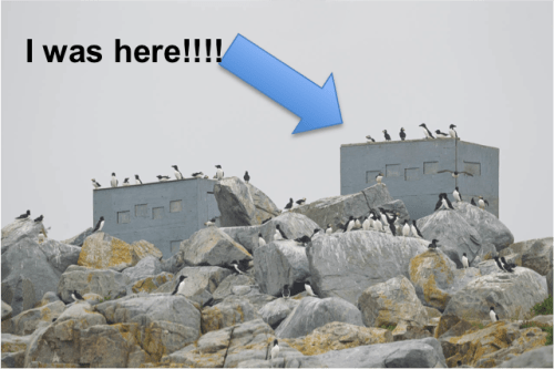I was here!  Photographing the puffins from the bird blinds on Machias Seal Island