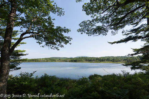 Witch Hole Pond, Acadia National Park