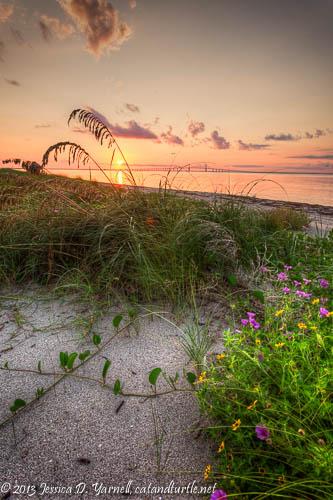 Sunrise at Fort De Soto - Beach Grasses