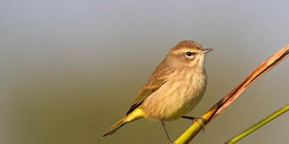 Central Florida Backyard Bird Identification
