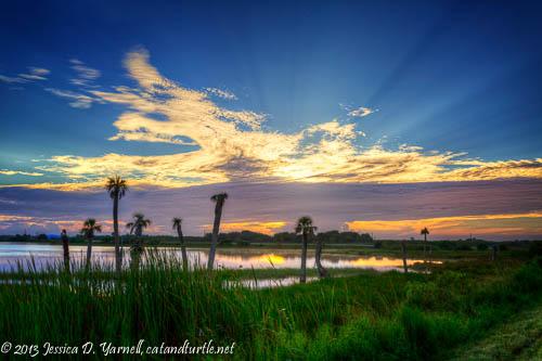 Viera Wetlands Sunrise