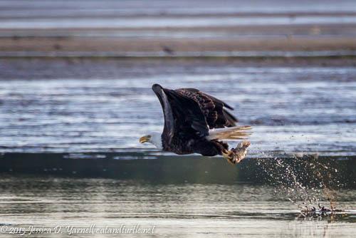 A Catch!