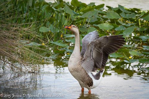 Father Goose Flap