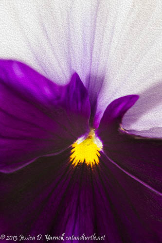 Heart of a Pansy