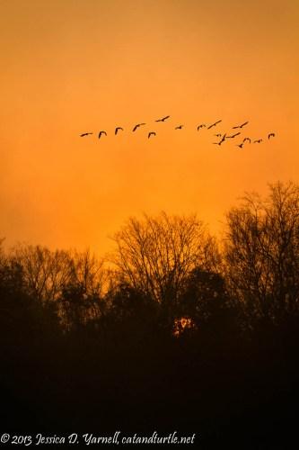 Outfall Wetlands Sunrise