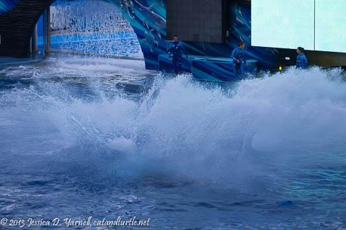 Shamu Splash_Sea World Orlando_201312069_copyrightJessYarnell