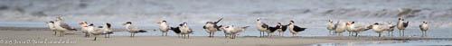 Beach Birds, Little Talbot Island State Park