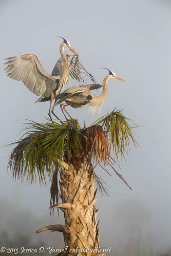 Adding Sticks to the Nest