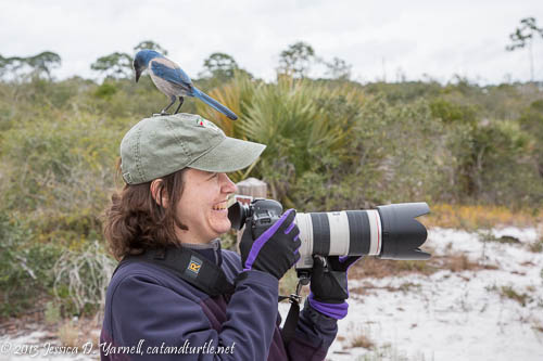 Jess with a Scrub Jay on her Head!