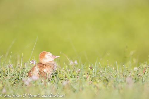 Asleep in the Meadow