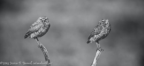 Mama and Papa Owl