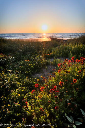 Beach Flowers Welcome a New Day