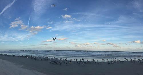 Gull Panorama