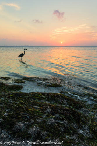 Sunrise at East Beach