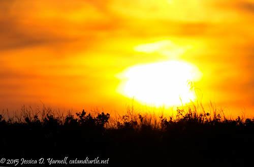 Grassy Sunset (April)