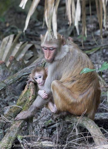 Mom and Baby - Look at his Tongue!!