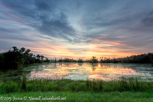 Sunrise at Orlando Wetlands Park