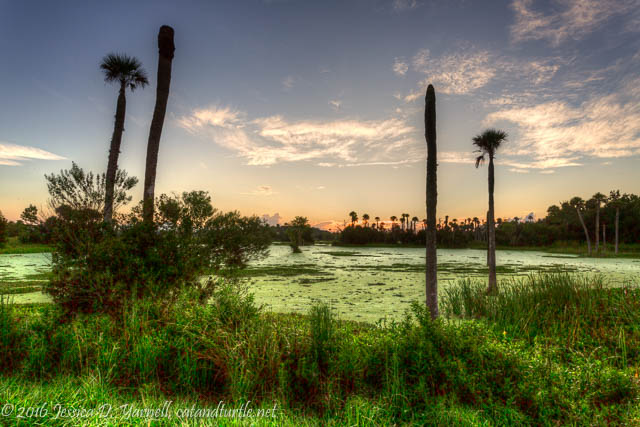 Sunrise at Orlando Wetlands