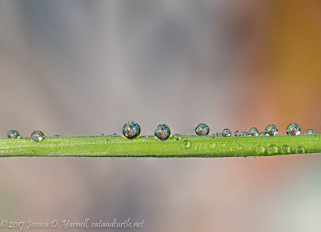 Butterfly Droplets