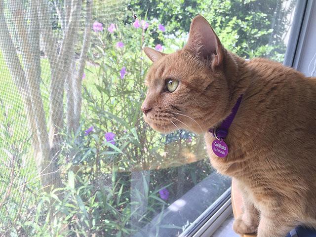 Window Watcher: Our cat Goldilocks