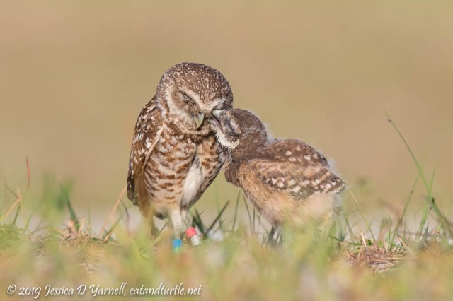 Not the Nicest Little Owlet