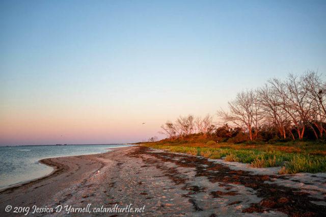 East Beach Trees at Dawn