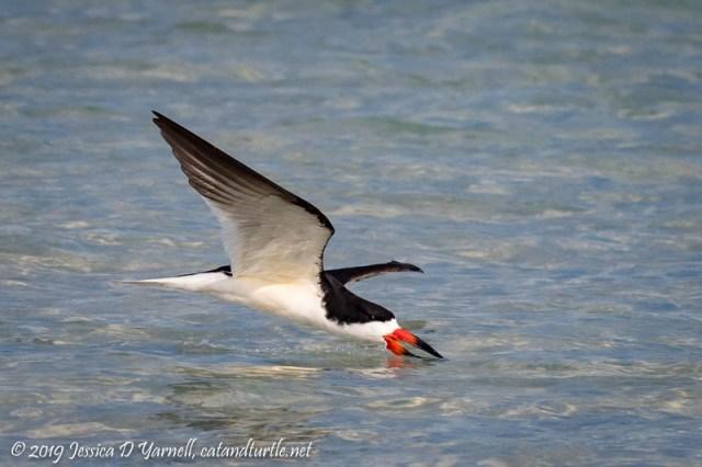 Skimming for Fish