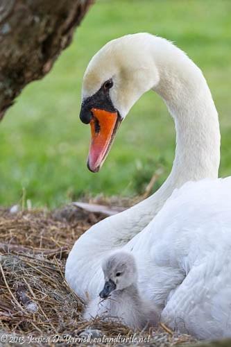 Mom-and-Baby-Wobbly_Lake-Morton_201304281_copyrightJessYarnell