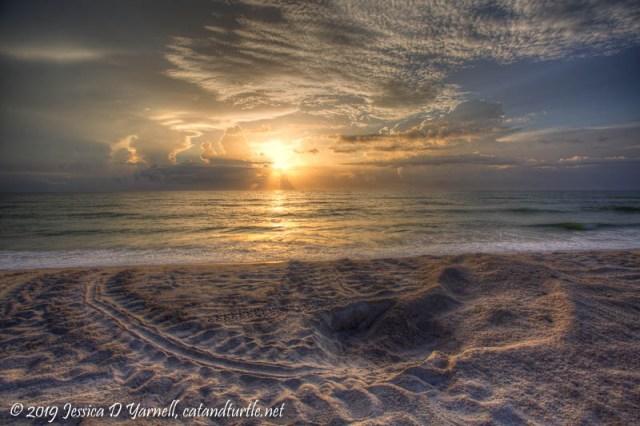 Turtle Nest at Sunrise