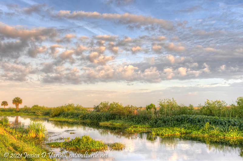 Spring Morning at Lake Apopka