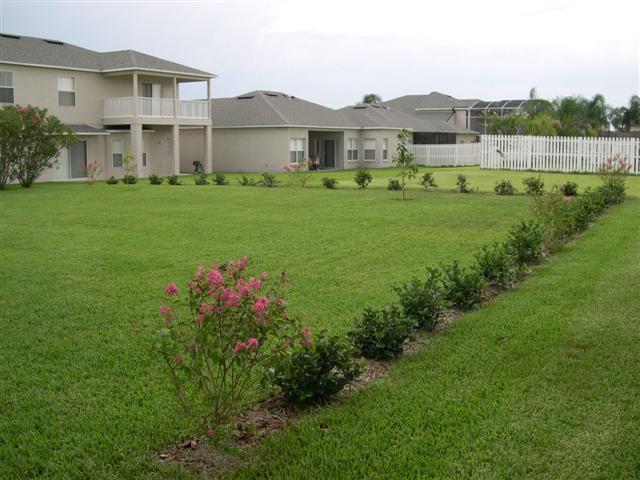 Viburnum around backyard