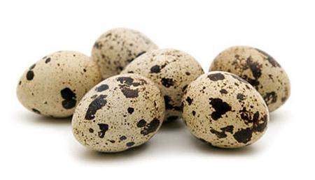 Koristite li jaja japanskih prepelica