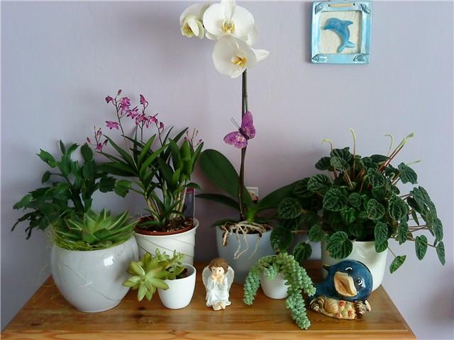 Nekoliko savjeta za ispravno održavanje cvijeća