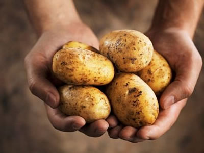 Znate li koji je pravi momenat za vađenje krompira?