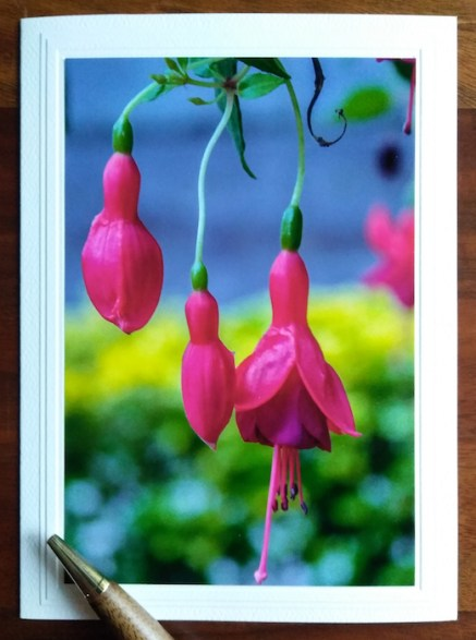 all occasion note card with fuchsias on front by doris lovadina lee