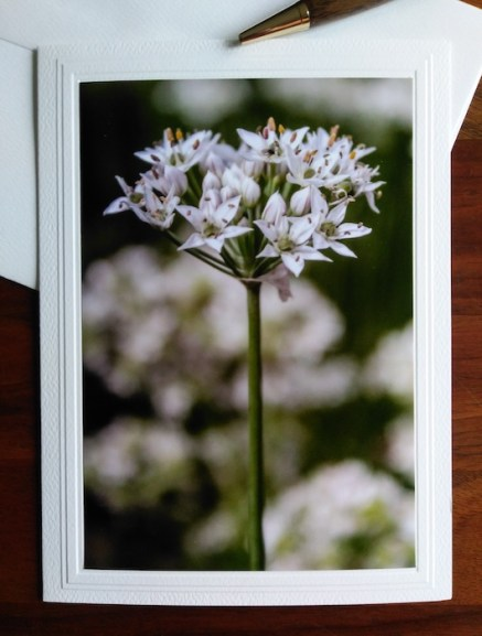 herb photography on blank greeting card doris lovadina-lee photographer toronto